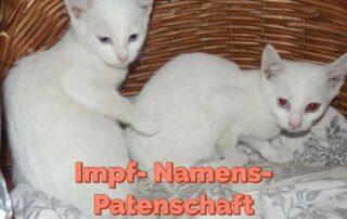 Patenschaft für Hanni & Nanni